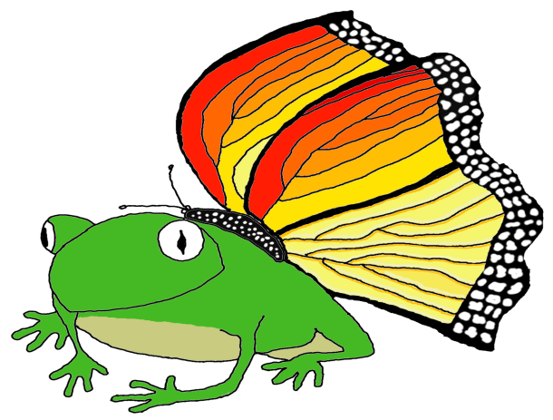 The Colorful Frog Fly